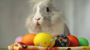 easter bunny with easter eggs the feast of the passove stock