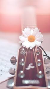 girly guitar wallpaper accessories art background beautiful beauty color colorful