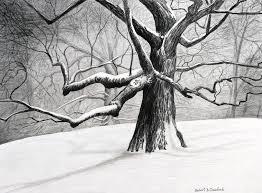 oak tree drawings for sale drawing oak tree