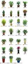 best 25 indoor tropical plants ideas on pinterest tropical