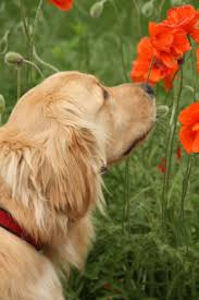 458 best dogs images on pinterest dogs happy spring and animal