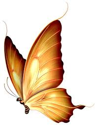 pin by ladonna rivers on butterflies butterfly