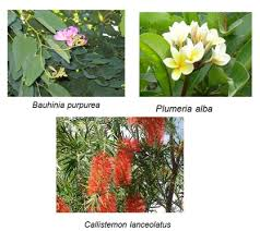 horticulture landscaping types of garden