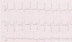 leader vet cardiology diagnostics and procedures