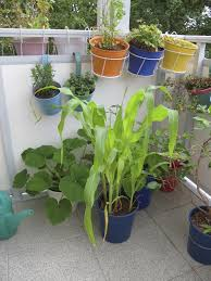 Good Garden Vegetables by Porta Growing With Vegetables U2013 Best Veggie Plants For Container
