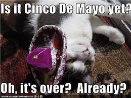Meme Cinco De Mayo - happy cinco de mayo khyi 95 3 the range