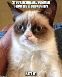 Bronchitis Meme - grumpy cat meme imgflip
