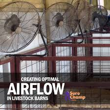 Livestock Barns Beat The Heat Airflow In Livestock Barns U2013 Sure Champ
