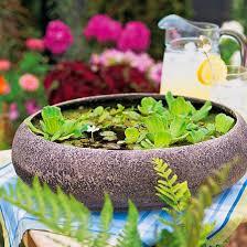 133 best mini bassin et plantes d u0027eau images on pinterest water