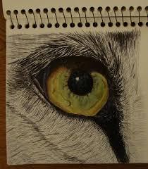 color lion eye lion 2017