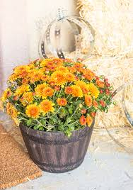 Fall Hay Decorations - d3to7l6wvcf4na cloudfront net wp content uploads d