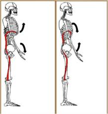 shoulder and rib cage position