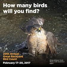 Audubon Backyard Bird Count by Ebird Data Entry During The Great Backyard Bird Count Michigan