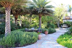 mediterranean garden palm trees landscape tropical with water