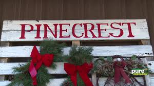 visiting the pinecrest tree farm