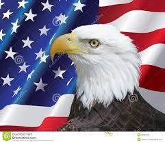 Bald Eagle On Flag American Bald Eagle Portrait With Usa Flag Background Stock Image