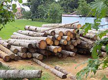 wood images wood