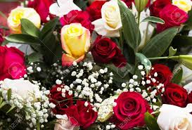multi colored roses bouquet of beautiful multi colored roses stock photo picture and