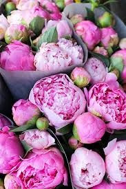 peonies flowers 89 best flowers images on flowers beautiful flowers
