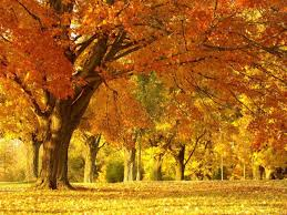 free religious fall pictures fall trees wallpaper christian
