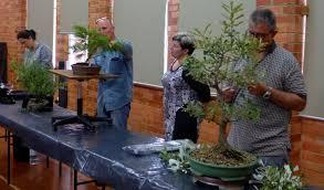 australian native plants victoria 2015 january meeting u2013 australian native trees u2013 bonsai society of