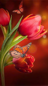 Cute Flower Wallpapers - flowers live wallpaper android apps on google play