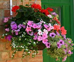 293 best container gardening hanging baskets images on pinterest
