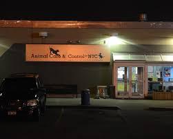 Meme Nyc - ac c plans new animal adoption center ny daily news