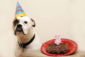maggy the bulldog u0027s birthday u2013 hansgutknecht com