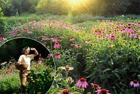 about us avena botanicals