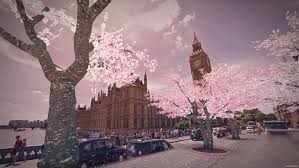 blossom trees make cherry blossom trees magically appear in your neighborhood