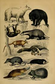 275 best antique illustration animals needs sorted images on