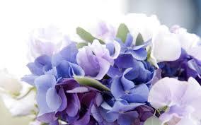 Purple Hydrangea Purple Hydrangea Drawing Wallpaper