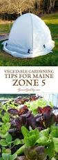 vegetable gardening tips for maine zone 5