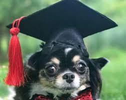 dog graduation cap cat graduation cap etsy