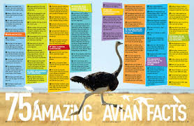 5 000 awesome facts about everything national geographic