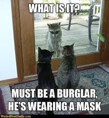 Meme Generator Raccoon - 465 best animal memes images on pinterest funny animals funny