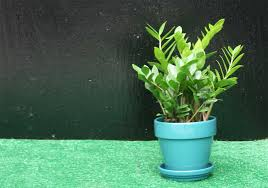 Fragrant Indoor Plants Low Light - 4 houseplants for low light behnke nurseries garden center