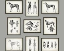 Dog Anatomy Poster Dog Illustration Etsy