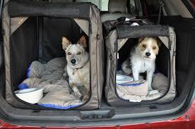 porta cani per auto socialdogcat le norme sul trasporto degli animali in auto