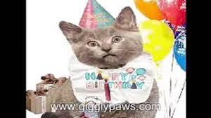 very funny cat singing happy birthday video ecard video dailymotion