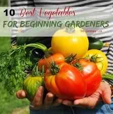 the best vegetables for beginning gardeners the gardening cook