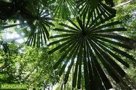 Tropical Rainforest Plant Species List - 10 rainforest facts for 2017
