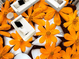wild chrysanthemum flower plant floral 3d flooring 3d wallpaper