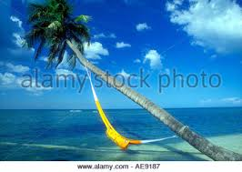 hammock hanging from coconut palm tree over water in puerto rico