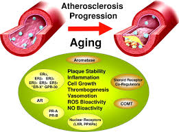 hormone replacement therapy and atherosclerosis in postmenopausal download figure
