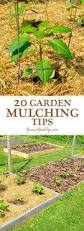 best 25 garden mulch ideas on pinterest garden ideas organic