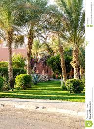 Decorative Shrubs Palm Trees Shrubs Ornamental Plants Along The Road Stock Photo