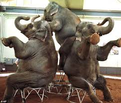Blind Men And The Elephant Story For Children The Town That Hanged An Elephant A Chilling Photo And A Macabre