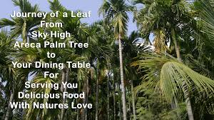 about disposable areca leaf plates palm leaf plates n bowls
